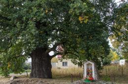Przydrożna kapliczka stojąca pod starym dębem. Milikowice, gmina Jaworzyna Śląska, powiat świdnicki.