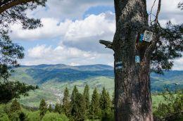 Przydrożna drewniana kapliczka skrzynkowa na drzewie. Szczawnic, powiat nowotarski.