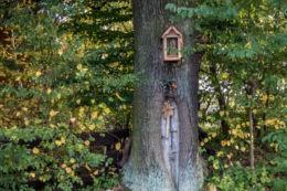 Kapliczka przydrożna na drzewie. Borowa, gmina Zakliczyn, powiat tarnowski.