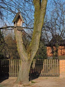 Przydrożna drewniana kapliczka skrzynkowa na drzewie. Bardzice, Gmina Kowala, powiat radomski.