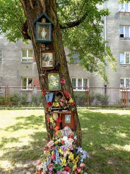 """""""Święte drzewo"""" przy ulicy Podskarbińskiej. Warszawa, Praga Południe."""