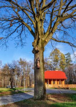Chrystus Frasobliwy - na drzewie przed leśniczówką. Hermanowa, gmina Tyczyn, powiat rzeszowski.