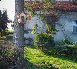 Przydrożna kapliczka na drzewie. Grabówno, gmina Miasteczko Krajeńskie, powiat pilski.