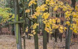 Krzyż drewniany przy drodze wiodącej na Górę Bardzką. Bardo, powiat ząbkowicki.