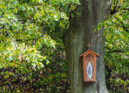 Przydrożna kapliczka, na drzewie. Srebrna Góra, gmina Stoszowice, powiat ząbkowicki.