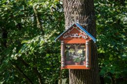 Przydrożna drewniana kapliczka skrzynkowa na drzewie. Strzeszyce, gmina Laskowa, powiat limanowski.