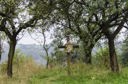 Drewniany krzyż przydrożny. C1: Borowa, gmina Zakliczyn, powiat tarnowski.