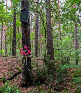 Przydrożna drewniana kapliczka skrzynkowa na drzewie. Puszcza Kampinoska, gmina Leoncin, powiat nowodworski.