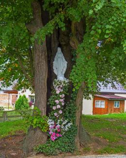 Przydrożna kapliczka w drzewie. Duninowo, gmina Ustka, powiat słupski.