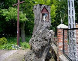 Przydrożna kapliczka z figurą Matki Boskiej w pniu drzewa przy ogrodzeniu kościoła św. Mikołaja. Bonikowo, gmina Kościan, powiat kościański.